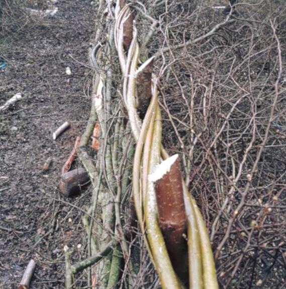 Willow binders